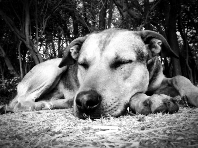 dog-57528_1920.jpg
